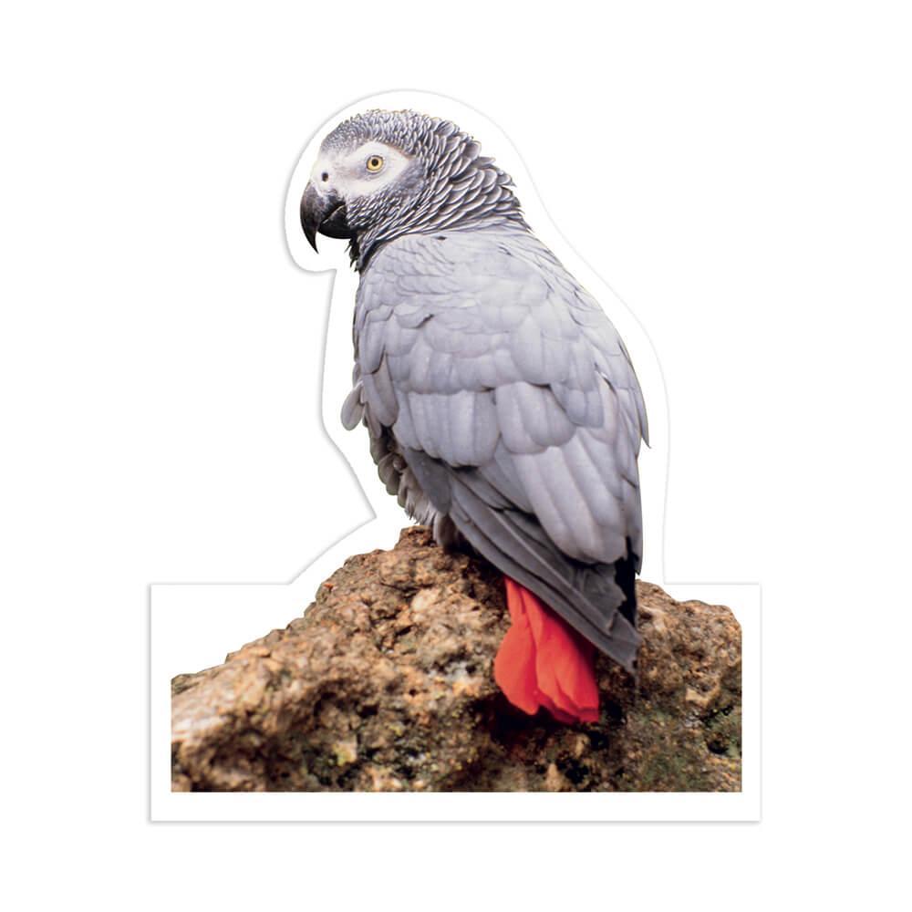 Parrot African Grey Macaw : Gift Sticker Bird Nature Animal Cute