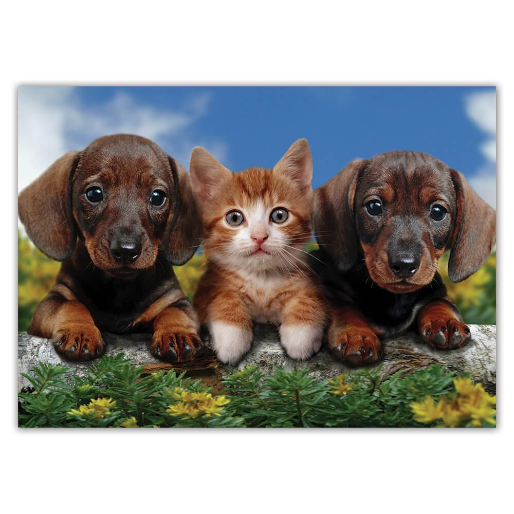 Dachshund With Cat : Gift Sticker Dog Photography Pet Funny Cute Puppy