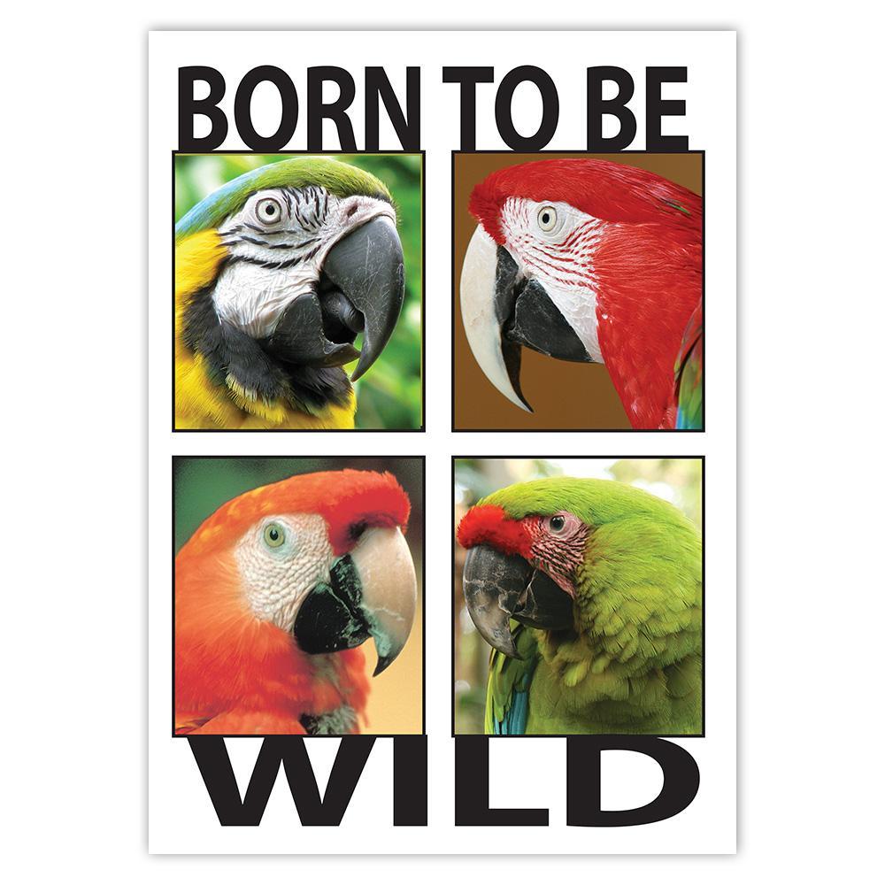 Macaw Born to Be Wild : Gift Sticker Parrot Bird Animal Cute