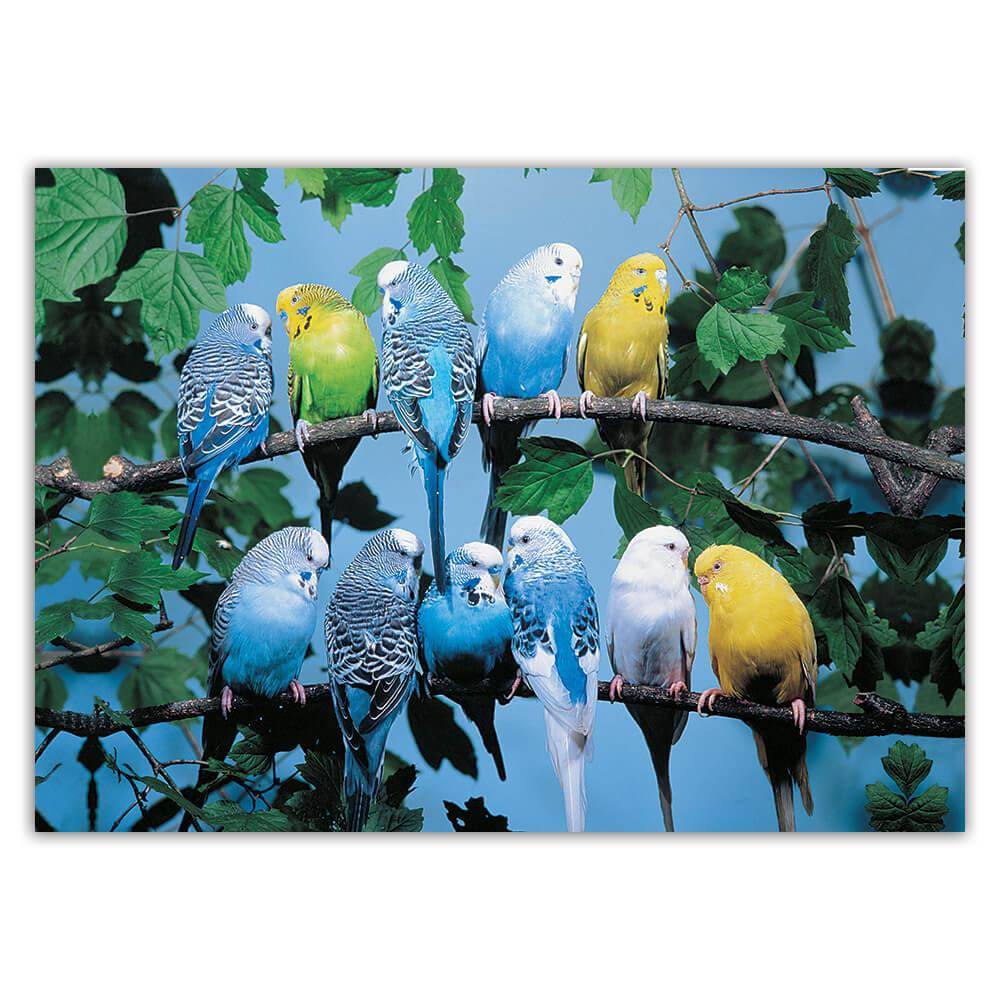Parakeets on Branch : Gift Sticker Yellow Blue Bird Animal Photography