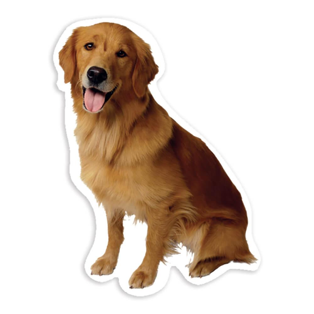 Golden Retriever : Gift Sticker Dog Pet Animal Puppy Canine Pets Dogs