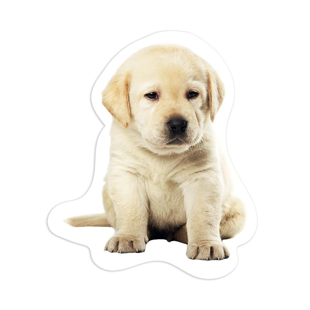 Labrador : Gift Sticker Dog Puppy Pet Animal Cute Canine Pets Dogs